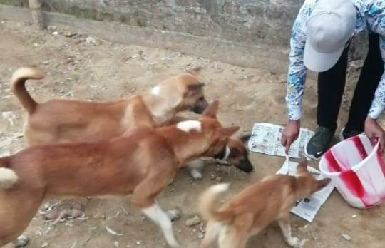 Assam: NGO volunteers step out to feed stray dogs amid lockdown 1