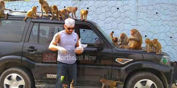 Actor Rajkumar Talukdar feeding monkeys in Guwahati. Image: Northeast Now