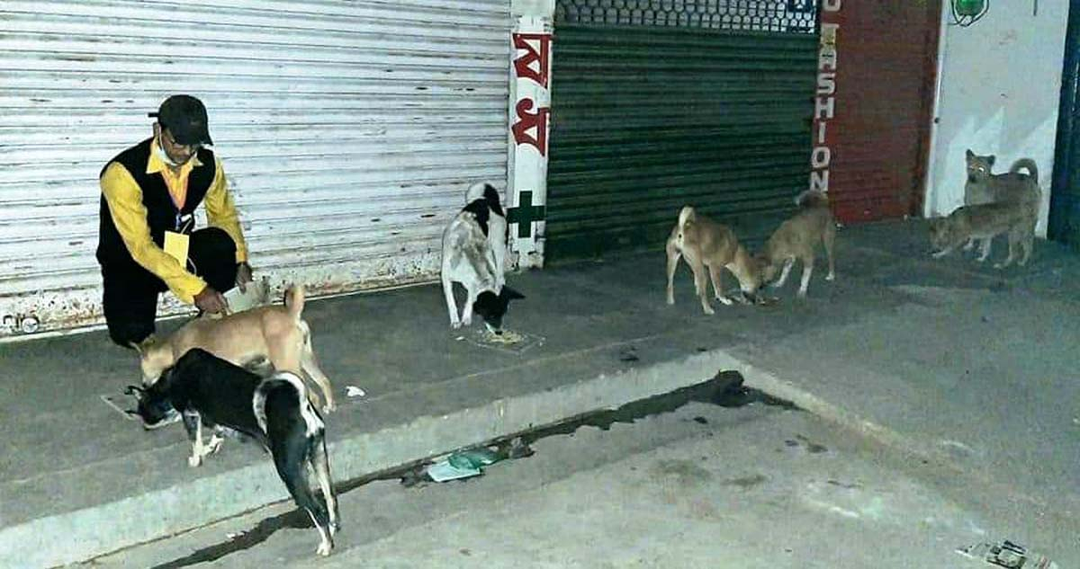 Stray dogs being fed