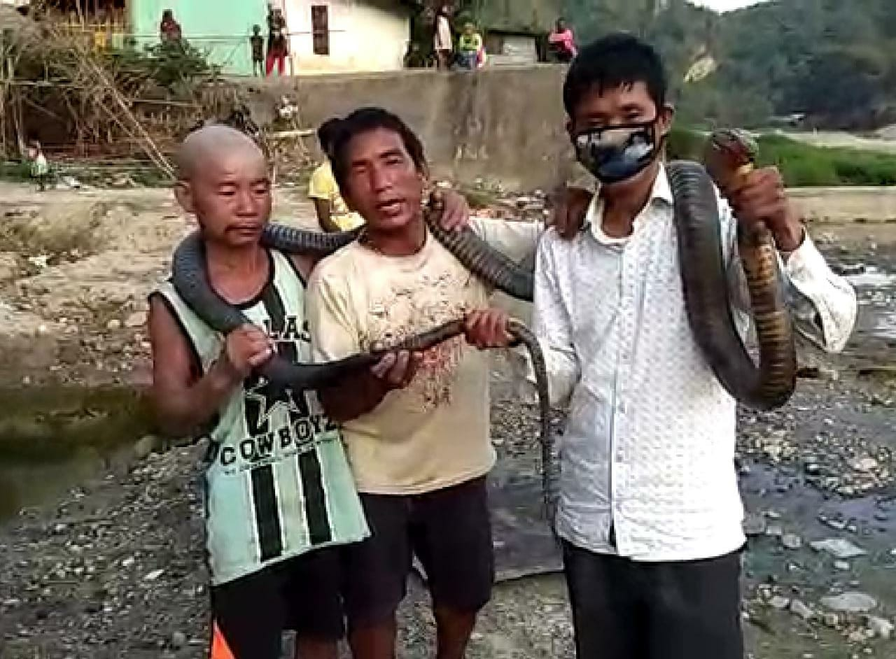 Feast on King Cobra meat ---  party time amid lock-down in Arunachal Pradesh  1