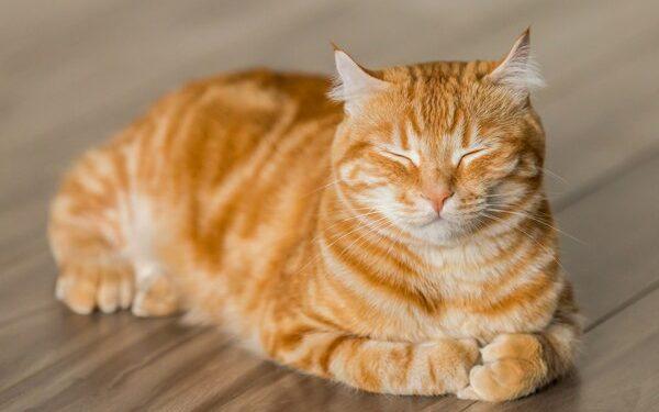 Representative image. Courtesy: Pet WebMD
