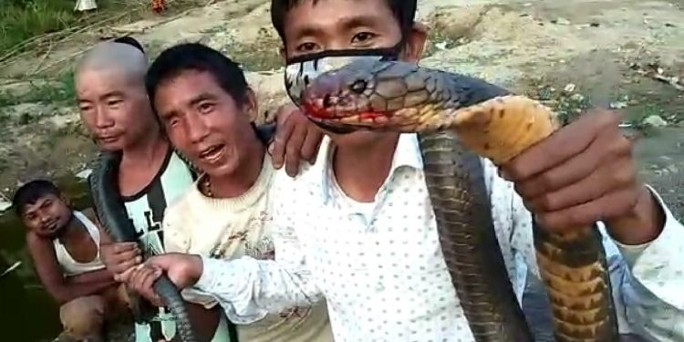 Feast on King Cobra meat --- party time amid lock-down in Arunachal Pradesh 1