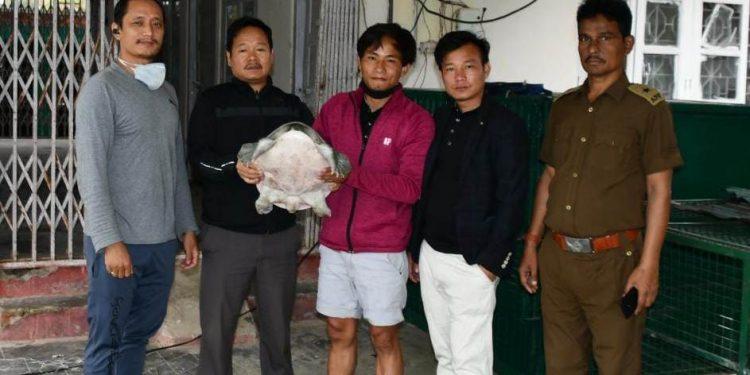 Arunachal: Chinese softshell turtle rescued at Naharlagun 1