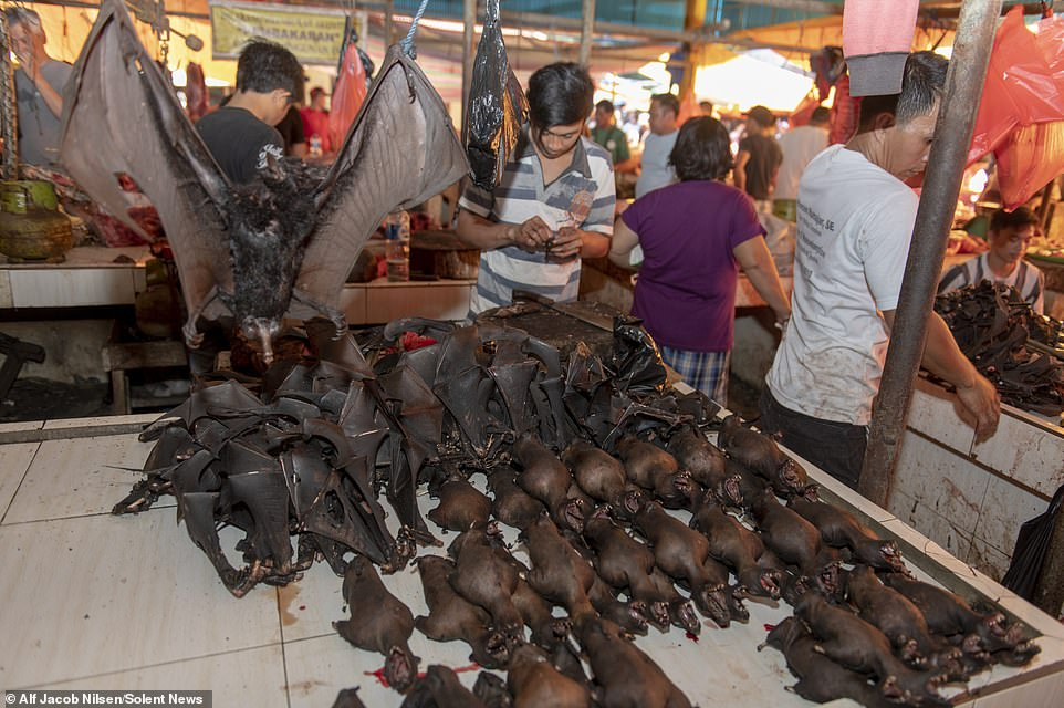 China's 'wet markets' start selling bats, dogs again: Report