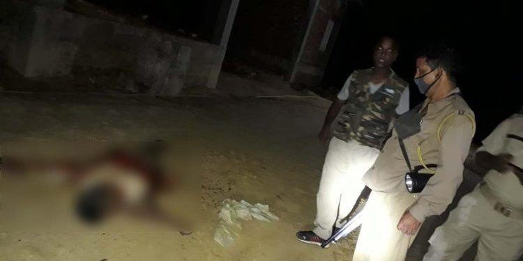 Wild elephant kills labourer