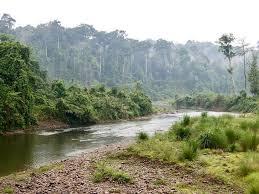 Dihing-Patkai Wildlife Sanctuary.
