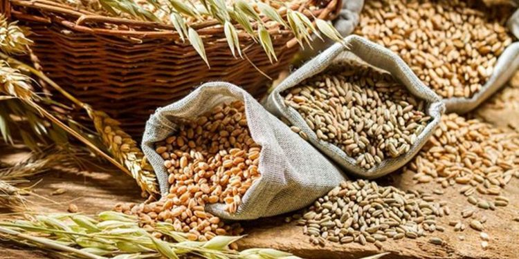 Different types of cereal grains with ears.