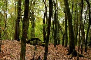 Sacred Forest: Its role on environment 1