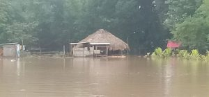 Assam: Flood scene grim in Dhemaji; over 60,000 affected 1