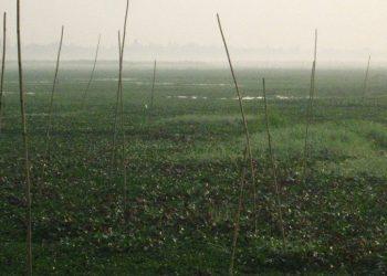 Maguri-Motapung Beel. Image: Mubina Akhtar