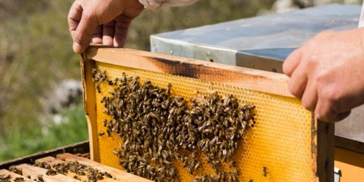 Honey mission