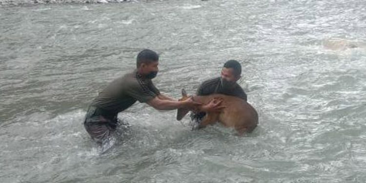 Indian army personnel while rescuing the barking deer