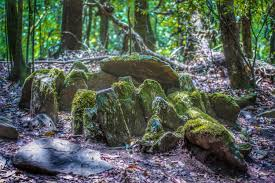 Sacred Forest: Its role on environment 3