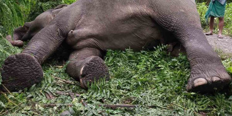 The carcass of an elephant. Image: Northeast Now
