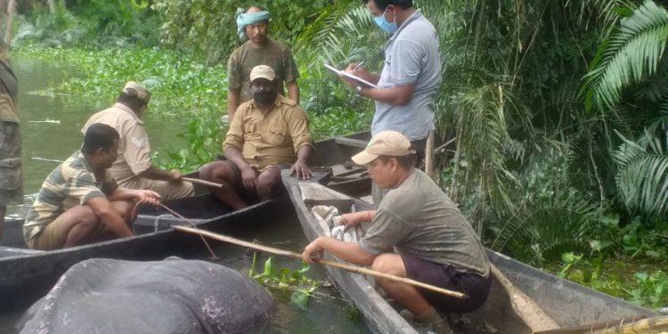 Kaziranga officials with the carcass of the rhino
