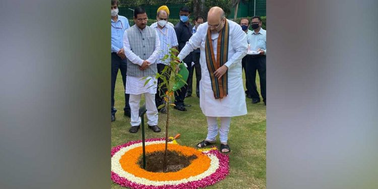Amit Shah launching plantation drive