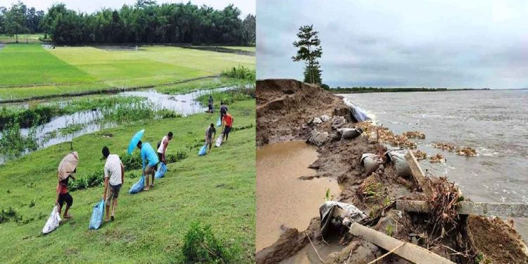 Villagers repairing a breach in the Sisi-Tekeliphuta embankment in Lakhimpur. Image: Northeast Now