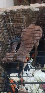 Assam: Exotic wildlife species seized by Cachar Forest personnel 2
