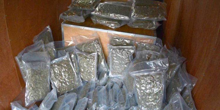 Cannabis seized in Tripura