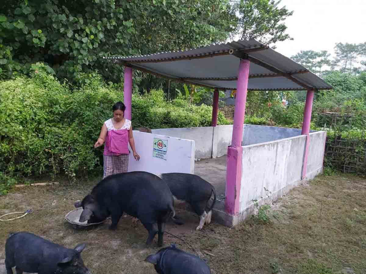 African Swine Fever in India: The Virus Remains with No Culling 3