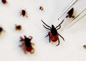 Tick-borne virus