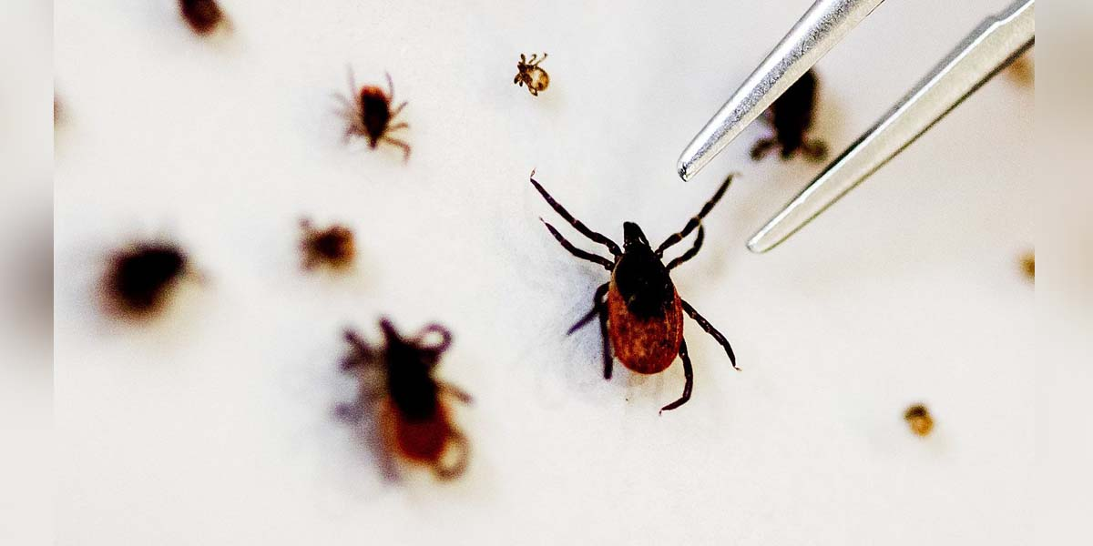 What is Tick-borne virus - and how anxious should you be