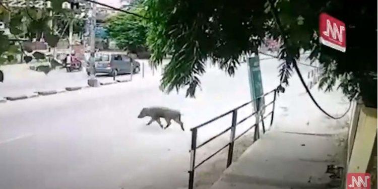 Assam Archaeology Dept employee hurt in wild boar attack dies 1