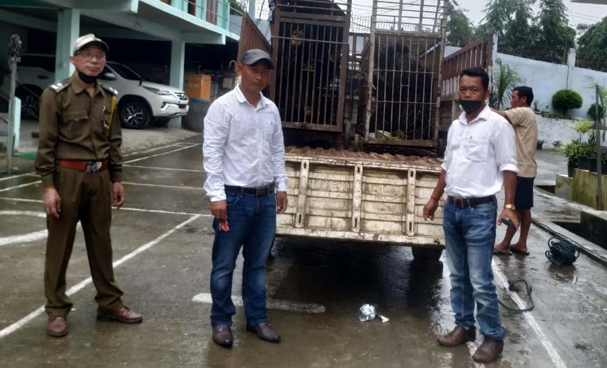 Himalayan black bear rescued