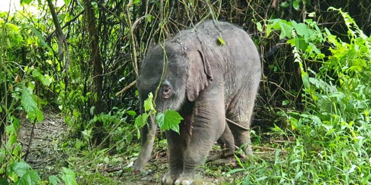 The rescued baby elephant.