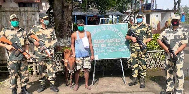 The apprehended cattle smuggler in BSF custody