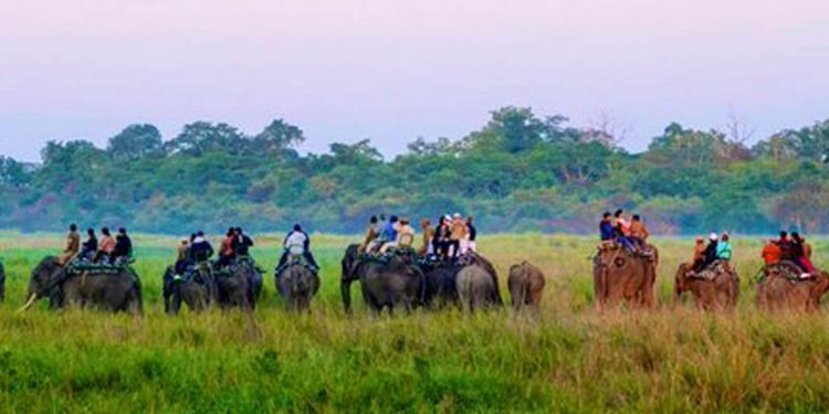 Elephant safari at Kaziranga (File image)