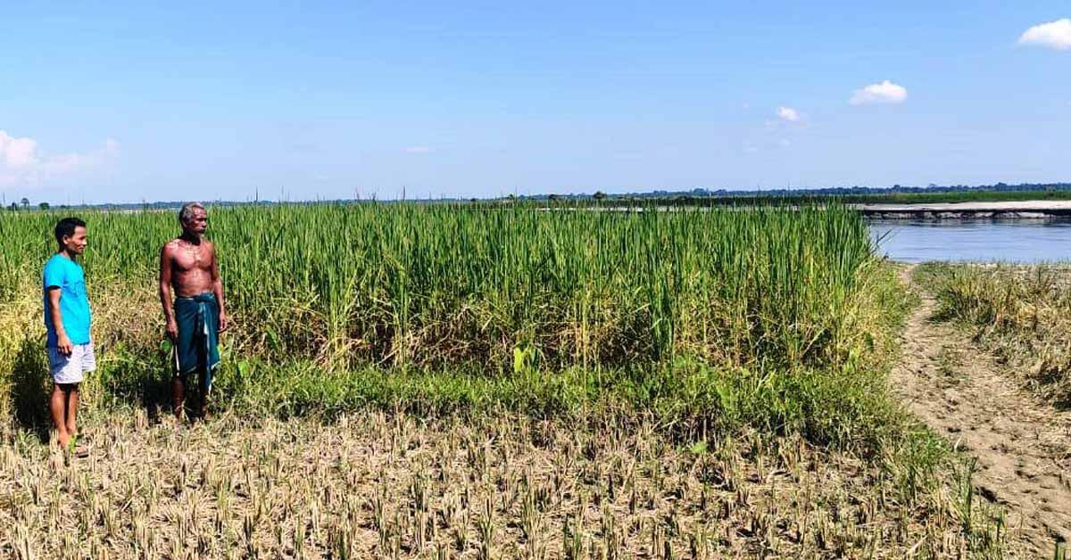 Assam: Erosion, siltation affects agriculture life in Lakhimpur 1