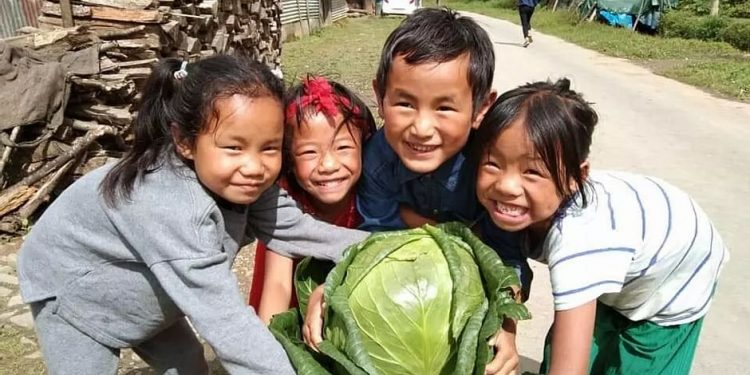 Manipur farmer grows 7.6 kg organic cabbage, picture goes viral 1