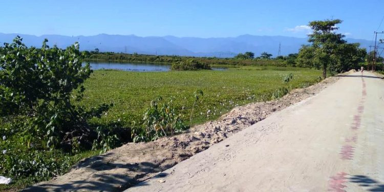 Assam: Road project diverted to protect environmentally threatened Satajan wetland 1