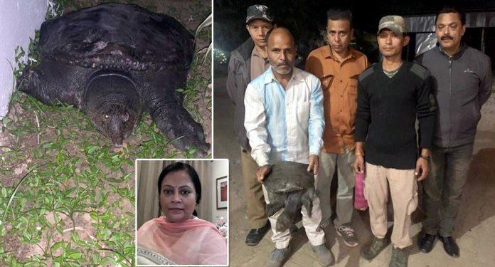 Assam University professor saves endangered turtle from being sold 1