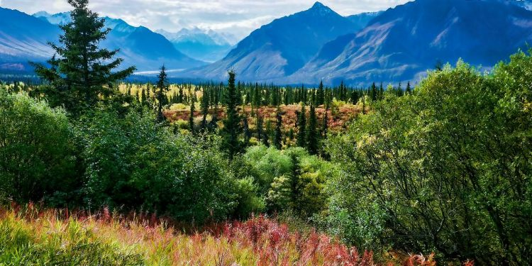 China vows to increase forest coverage rate in 5 next years 1