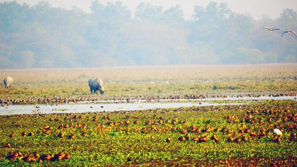 Securing wetlands for safe passages of migratory birds 1