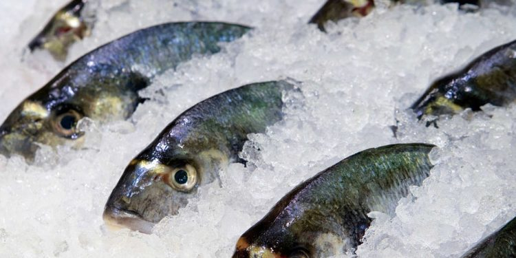 2 frozen fish packages from India test positive for coronavirus in China 1