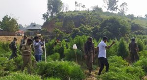 Tripura: Villagers, police clash in Sepahijala over drive against illegal ganja plantation 3