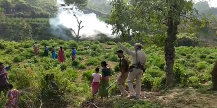 Tripura: Villagers, police clash in Sepahijala over drive against illegal ganja plantation 1