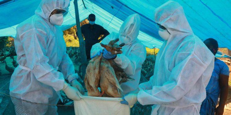 Nagaland issues advisory on avian influenza 1