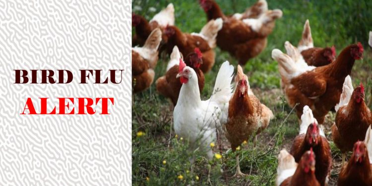 Bird flu outbreak: Thousands of poultry to be culled, Environment Ministry calls situation 'serious' 1