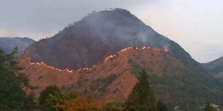 Forest fire in Dzukou Valley
