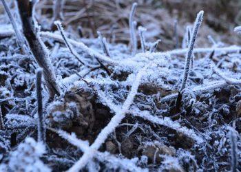 snowfall in Dima Hasao