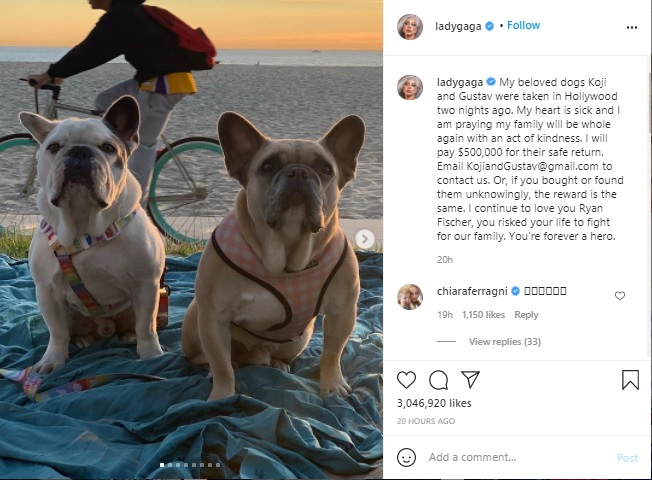 """Lady Gaga's stolen French bulldogs """"safely reunited"""", says Los Angeles Police 1"""