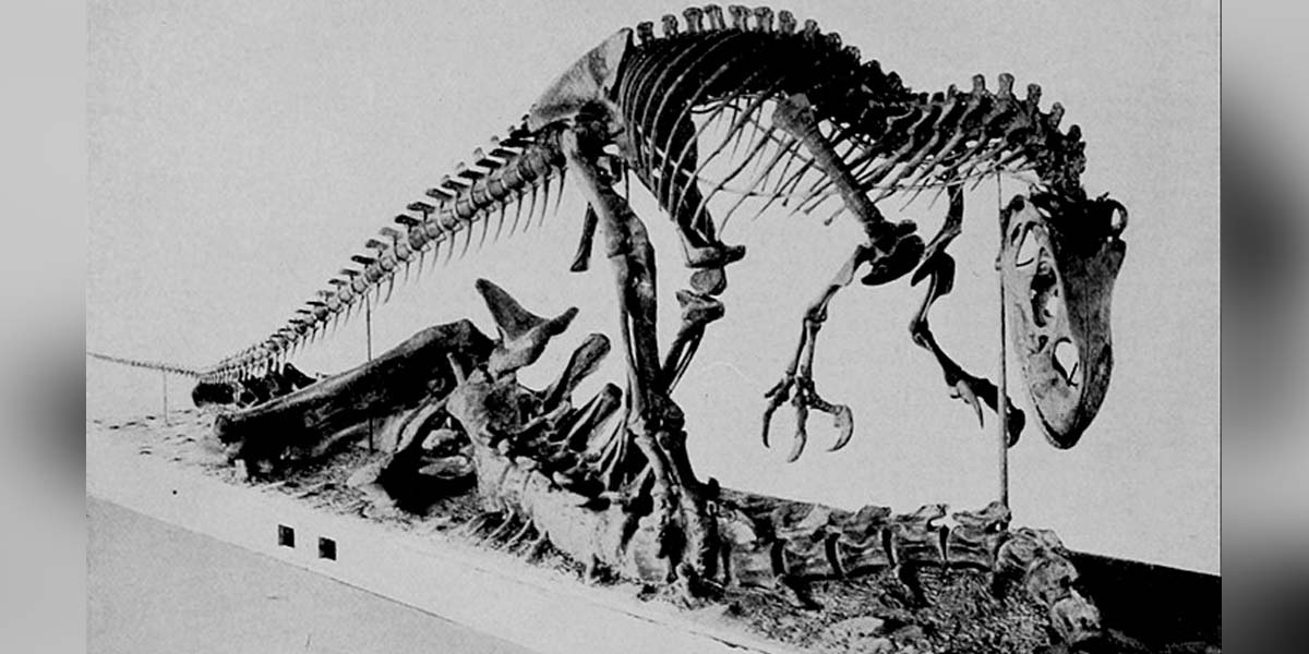 Career opportunities in Palaeontology - Northeast Now