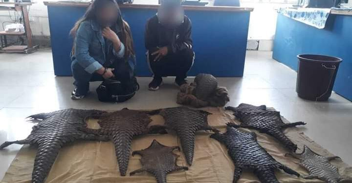 Assam: Pangolin scales seized in Tinsukia, two arrested 1
