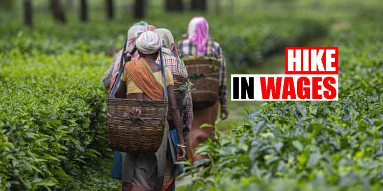 Assam: Minimum wage of tea garden workers to be increased, informs Himanta Biswa Sarma 1