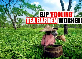BJP Government 'fooling' Assam tea workers? Kerala tea workers get more daily wage than those in Assam 6