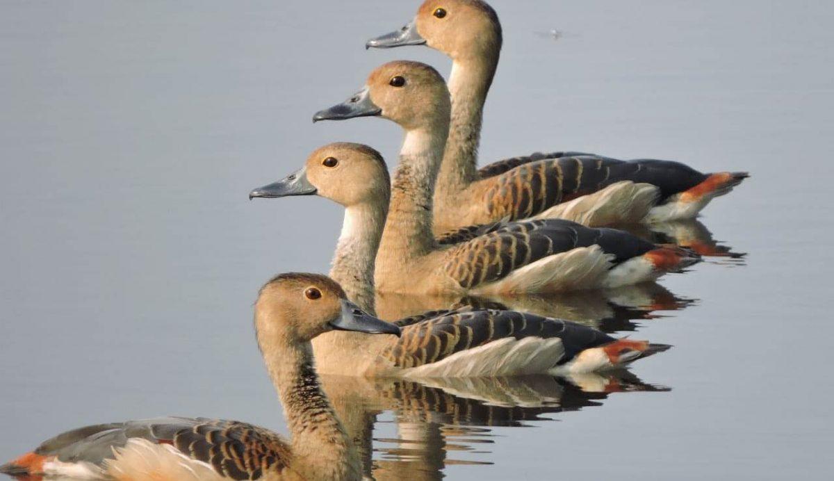 Water birds make a beeline to Assam's wetland 1